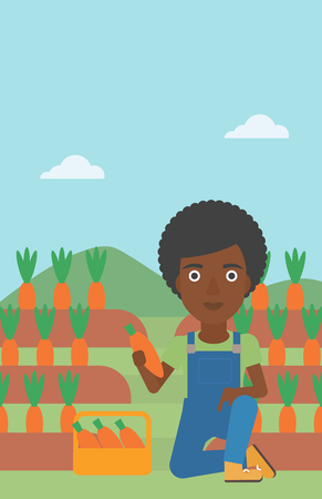 An african-american woman collecting carrots in basket on the background of field vector flat design illustration. Vertical layout. Illustration