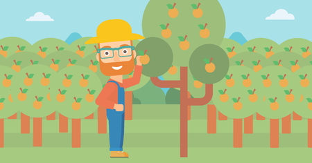 A hipster man with the beard collecting oranges vector flat design illustration. Horizontal layout.