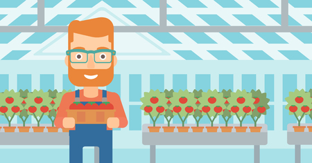 A hipster man with the beard holding a box with tomatoes on the background of greenhouse vector flat design illustration. Horizontal layout. 向量圖像