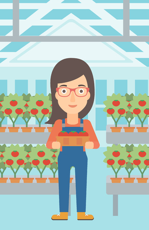greenhouse: A woman holding a box with tomatoes on the background of greenhouse vector flat design illustration. Vertical layout.