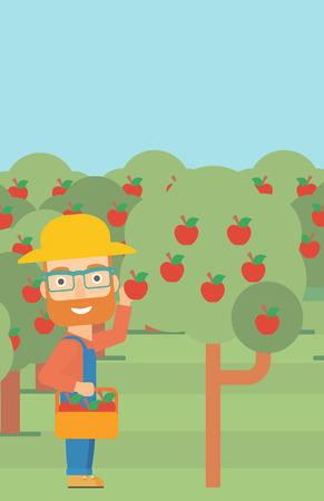 vertical garden: A hipster man with the beard holding a basket and collecting apples in fruit garden vector flat design illustration. Vertical layout. Illustration