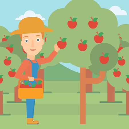 peasant woman: A woman holding a basket and collecting apples in fruit garden vector flat design illustration. Square layout.