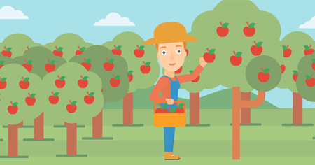 A woman holding a basket and collecting apples in fruit garden vector flat design illustration. Horizontal layout.