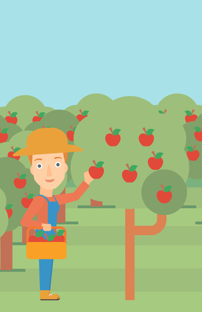 vertical garden: A woman holding a basket and collecting apples in fruit garden vector flat design illustration. Vertical layout.