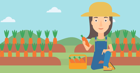A woman collecting carrots in basket on the background of field vector flat design illustration. Horizontal layout.