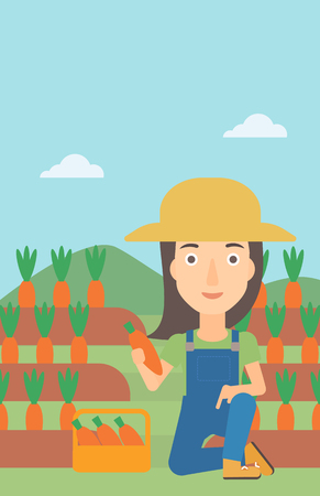 collecting: A woman collecting carrots in basket on the background of field vector flat design illustration. Vertical layout.