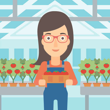 greenhouse: A woman holding a box with tomatoes on the background of greenhouse vector flat design illustration. Square layout. Stock Photo