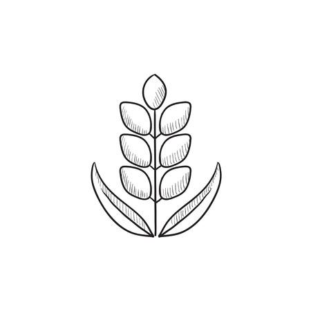 小麦ベクター スケッチ アイコンを背景に分離します。手描きの小麦のアイコン。インフォ グラフィック、web サイトまたはアプリケーションの小麦