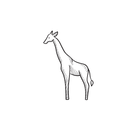 giraffa: Giraffe vector sketch icon isolated on background. Hand drawn Giraffe icon. Giraffe sketch icon for infographic, website or app. Illustration
