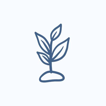 새싹 벡터 스케치 아이콘 배경에 고립입니다. 손 새싹 아이콘을 그려. 인포 그래픽, 웹 사이트 또는 앱 스케치 아이콘을 새싹.
