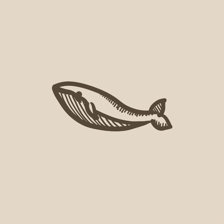 baleen whale: Whale vector sketch icon isolated on background. Hand drawn Whale icon. Whale sketch icon for infographic, website or app. Illustration