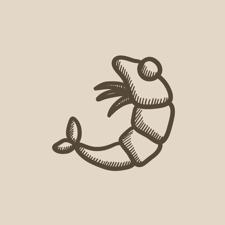 krill: Shrimp vector sketch icon isolated on background. Hand drawn Shrimp icon. Shrimp sketch icon for infographic, website or app. Illustration