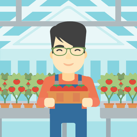 asian farmer: An asian farmer holding a box with tomatoes on the background of greenhouse. Young farmer collecting tomatoes in the greenhouse. Vector flat design illustration. Square layout. Illustration