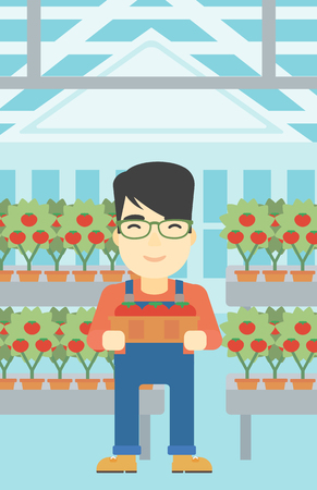 greenhouse: An asian farmer holding a box with tomatoes on the background of greenhouse. Young farmer collecting tomatoes in the greenhouse. Vector flat design illustration. Vertical layout.