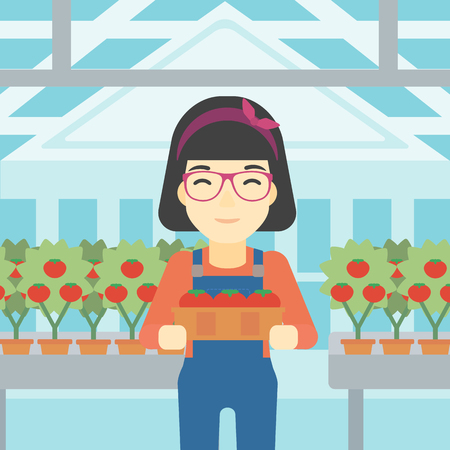 greenhouse: An asian female farmer holding a box with tomatoes on the background of greenhouse. Young farmer collecting tomatoes in the greenhouse. Vector flat design illustration. Square layout.