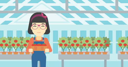 greenhouse: An asian female farmer holding a box with tomatoes on the background of greenhouse. Young farmer collecting tomatoes in the greenhouse. Vector flat design illustration. Horizontal layout.