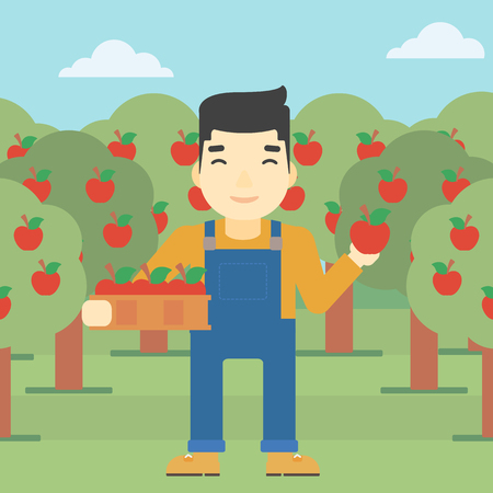 asian gardening: An asian farmer holding a box with apples in one hand and an apple in another on a background of garden with trees. Farmer collecting apples. Vector flat design illustration. Square layout.