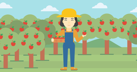 asian gardening: An asian female farmer holding a box with apples in one hand and an apple in another on a background of garden with trees. Farmer collecting apples. Vector flat design illustration. Horizontal layout.