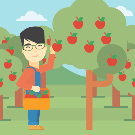 asian farmer: An asian farmer holding a basket and collecting apples in fruit garden. Farmer collecting apples. Vector flat design illustration. Square layout. Illustration