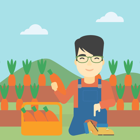 asian farmer: An asian farmer collecting carrots in basket. Young farmer holding a carrot on the background of field. Vector flat design illustration. Square layout. Illustration