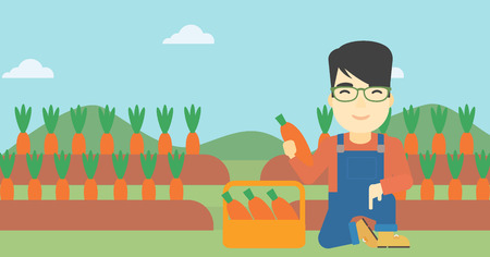 collecting: An asian farmer collecting carrots in basket. Young farmer holding a carrot on the background of field. Vector flat design illustration. Horizontal layout.