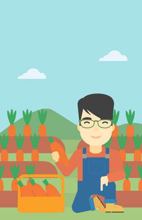 asian farmer: An asian farmer collecting carrots in basket. Young farmer holding a carrot on the background of field. Vector flat design illustration. Vertical layout. Illustration