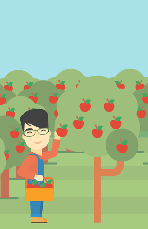 vertical garden: An asian farmer holding a basket and collecting apples in fruit garden. Farmer collecting apples. Vector flat design illustration. Vertical layout.