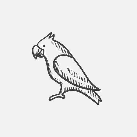 Parrot sketch icon for web, mobile and infographics. Hand drawn vector isolated icon. 矢量图像