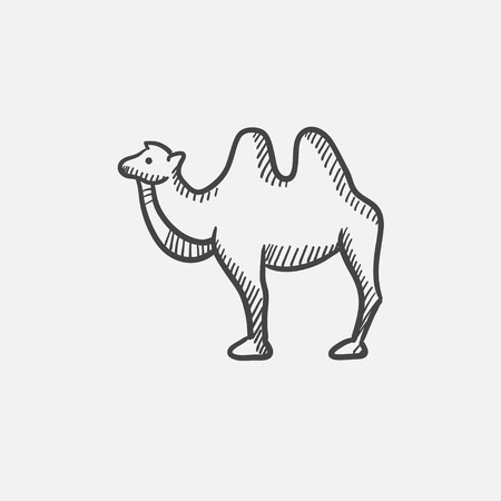 hump: Camel sketch icon for web, mobile and infographics. Hand drawn vector isolated icon. Illustration