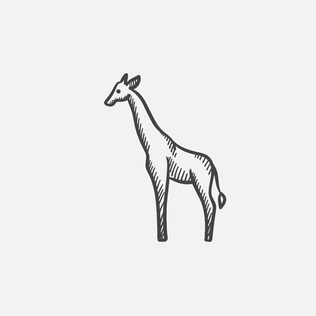 Giraffe sketch icon for web, mobile and infographics. Hand drawn vector isolated icon.