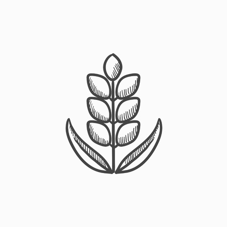 rye: Wheat vector sketch icon isolated on background. Hand drawn Wheat icon. Wheat sketch icon for infographic, website or app.