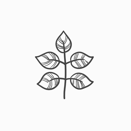 Branch with leaves vector sketch icon isolated on background. Hand drawn Branch with leaves icon. Branch with leaves sketch icon for infographic, website or app.