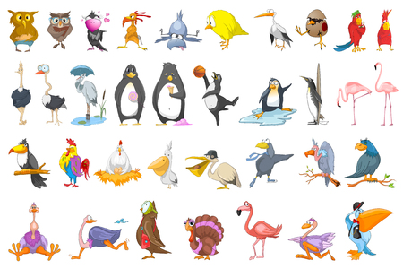 Set of various colourful birds. Collection of different species of birds playing basketball, baseball, reading book, sitting on eggs, eating sweets. Vector illustration isolated on white background.