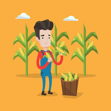 corn field: A happy farmer holding a corn cob on the background of corn field. Farmer collecting corn. Farmer standing near basket full with corn. Vector flat design illustration. Square layout.
