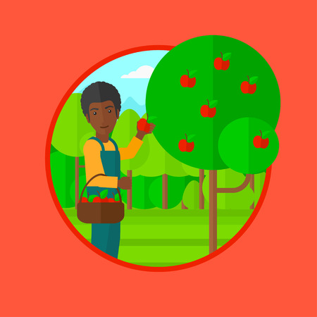 picker: An african-american man holding a basket full of apples. Young gardener harvesting apples. Young male farmer collecting apples. Vector flat design illustration in the circle isolated on background.