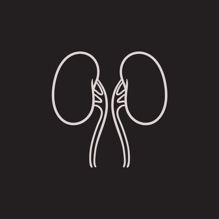 Kidney vector sketch icon isolated on background. Hand drawn Kidney icon. Kidney sketch icon for infographic, website or app. Illustration