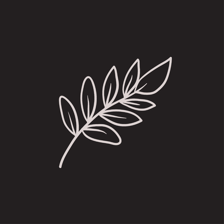 christianity palm sunday: Palm branch vector sketch icon isolated on background. Hand drawn Palm branch icon. Palm branch sketch icon for infographic, website or app.