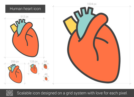 Human heart vector line icon isolated on white background. Human heart line icon for infographic, website or app. Scalable icon designed on a grid system. Stock Vector - 128544496