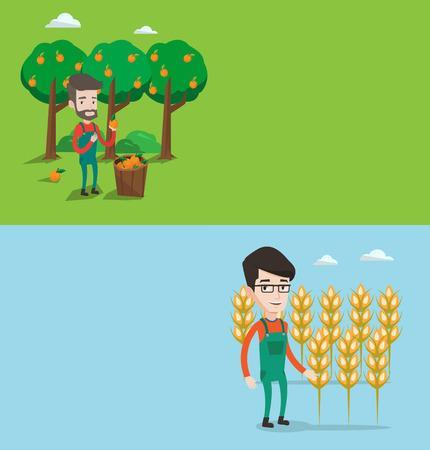 picking: Two agricultural banners with space for text. Vector flat design. Horizontal layout. Farmer holding orange on the background of orange trees. Farmer collecting oranges harvest. Farmer picking oranges. Illustration