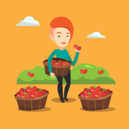 Farmer holding basket with tomatoes. Farmer showing ripe red tomato on the background of field with bushes of tomatoes. Farmer collecting tomatos. Vector flat design illustration. Square layout. Illustration