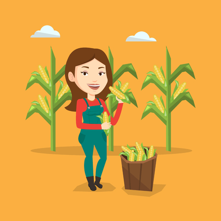 corn field: Female caucasian farmer holding a corn cob on the background of corn field. Farmer collecting corn. Happy smiling farmer standing near basket with corn. Vector flatdesign illustration. Square layout.