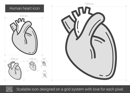 Human heart vector line icon isolated on white background. Human heart line icon for infographic, website or app. Scalable icon designed on a grid system. Vettoriali