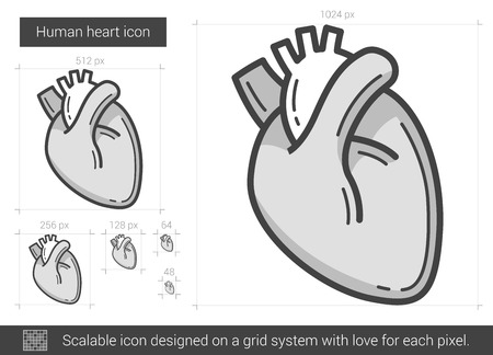 Human heart vector line icon isolated on white background. Human heart line icon for infographic, website or app. Scalable icon designed on a grid system. Illustration