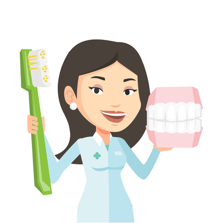 orthodontist: Young caucasian dentist holding dental jaw model and toothbrush in hands. Friendly female dentist showing dental jaw model and toothbrush. Vector flat design illustration isolated on white background.