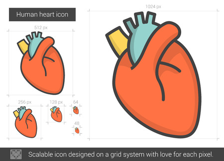 aortic bodies: Human heart line icon. Illustration