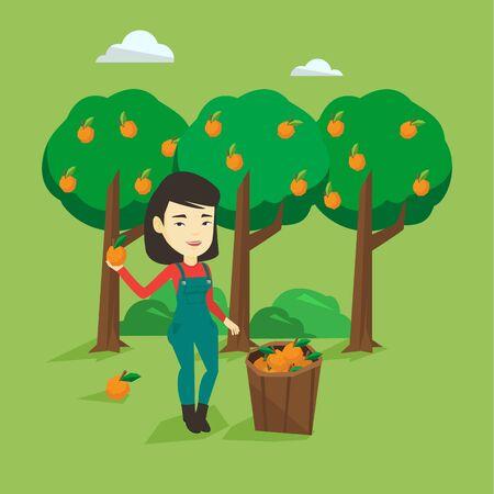 Gardener holding an orange on the background of orange trees. Female asian gardener collecting oranges. Gardener standing near basket with oranges. Vector flat design illustration. Square layout. Illustration