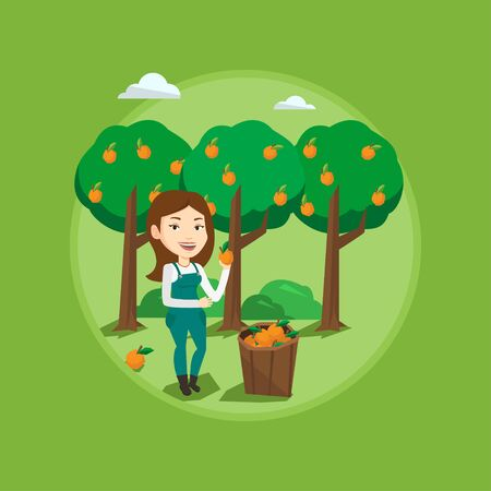 Gardener holding an orange on background of orange trees. Gardener collecting oranges. Gardener standing near basket with oranges. Vector flat design illustration in the circle isolated on background. Illustration
