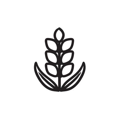 Wheat sketch icon.