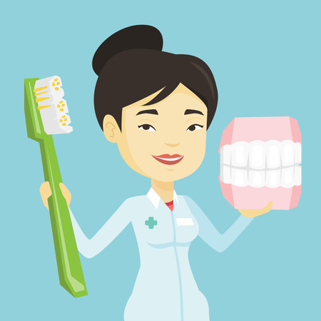 Young asian smiling dentist holding dental jaw model and a toothbrush in hands. Friendly happy dentist showing dental jaw model and toothbrush. Vector flat design illustration. Square layout.