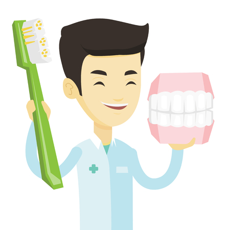 Young asian dentist holding dental jaw model and a toothbrush in hands. Friendly happy dentist showing dental jaw model and toothbrush. Vector flat design illustration isolated on white background. Illustration